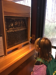Checking out the Bee Hive, searching for the queen bee.